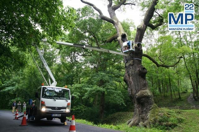 Údržba stromů plošinou