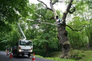 Práce plošinou - řezání stromů, péče o stromy